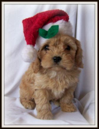 Exceptional I Want For Christmas #8: 2f1b1439246ddbb6712c920c3a1ae0b9--christmas-deco-christmas-puppy.jpg