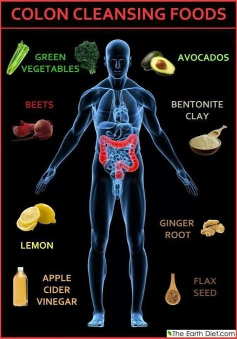 Intestinal Detox Diet by Colon Cleansing Foods Health Stomach Intestinal