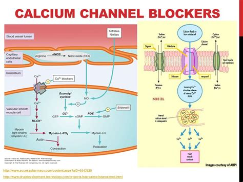 Calcium Channel Blockers Also Search For Handbook Of Water And Wastewater Treatment Plant Operations
