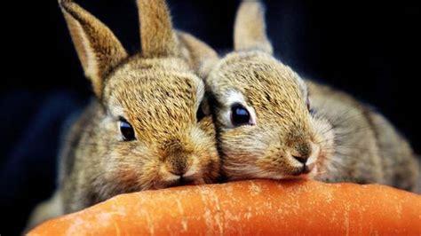 Is your rabbit a happy bunny?   BelfastTelegraph.co.uk