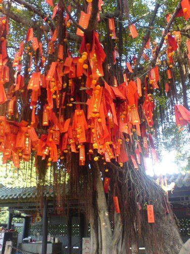 blessings feng shui blog    feng shui wishing tree   chinese  year