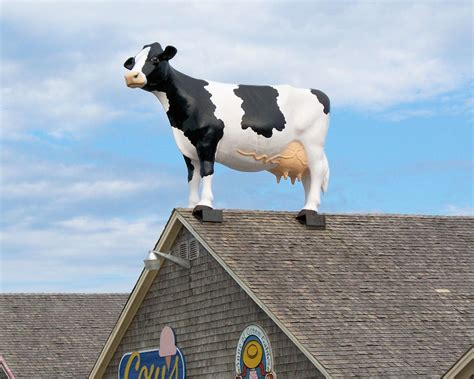 on the roof big cow on the roof roadside wonders
