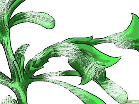 come coltivare il rosmarino in vaso come coltivare il rosmarino in casa 20 passaggi
