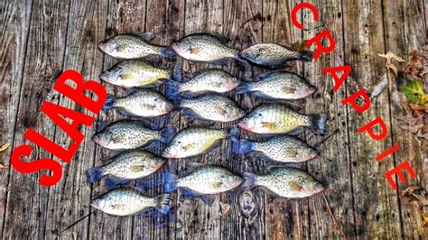 crappie fishing arkansas  youtube