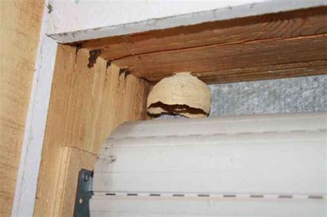 hornisse im haus hornissen im dach im rolladen oder in dmmschichten