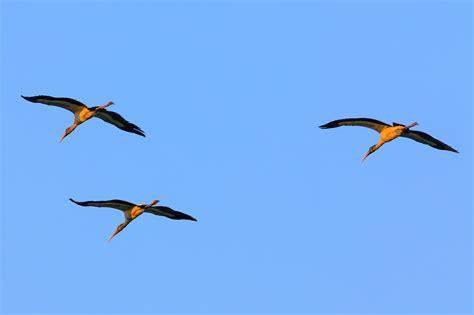 Bald Knob Nwr by Wood Storks Birdwatching