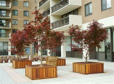 Large Wooden Planters For Trees by Large Tree Planter Box Exteriors Trees