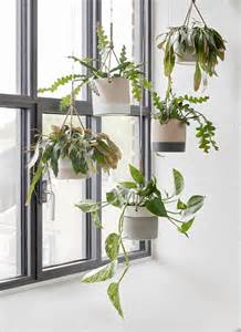 indoor hanging plants 17 best ideas about indoor hanging plants on pinterest hanging plants window plants and
