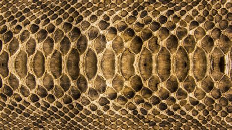 wallpapers snake skin wallpapers snake skin wallpapers and images wallpapers pictures