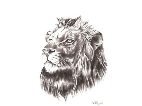 realistic lion tattoo designs realistic grey pencil design