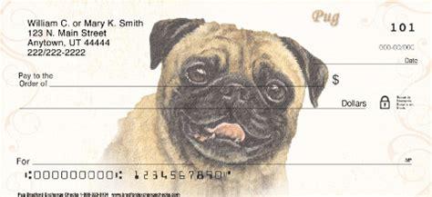 black pug checks checks
