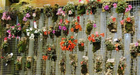 White Vase Dendrobium Cuthbertsonii Wall Hanging Gardens