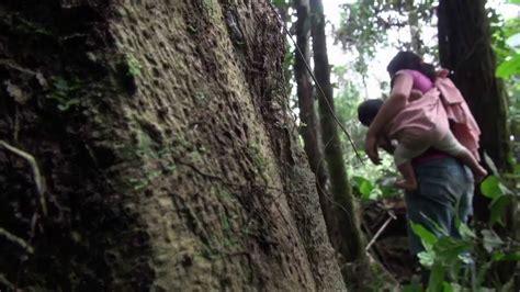 imagenes extrañas en el bosque mujeres en el bosque youtube