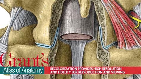 Grant S Atlas Of Anatomy Youtube