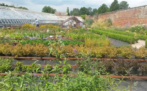Walled Garden Nursery Plants For Sale At Chantry Walled Garden Activlives