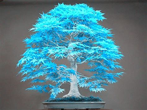 vasi bonsai usati vaso bonsai grande usato vedi tutte i 30 prezzi