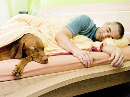 nicht in seinem bett schlafen hund und katze nicht im bett schlafen lassen berlin de