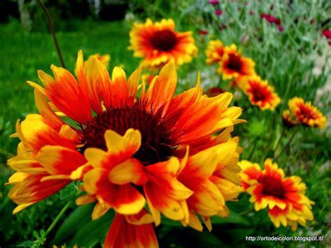 fiori estivi l orto dei colori fiori estivi