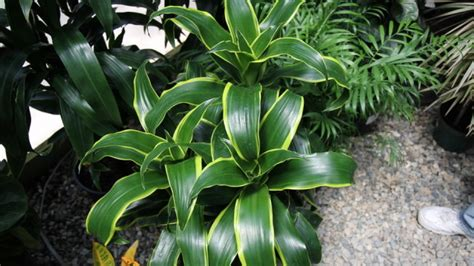 light houseplants   easy  grow