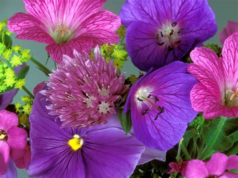 imagenes todo flores porque as flores s 227 o perfumadas e qual o significado das