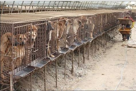 puppy mill conditions repin to educate others puppy mills usually house dogs in overcrowded and