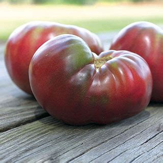 Tomato Purple Seeds purple organic tomato seeds from park seed