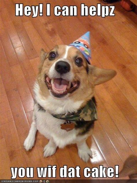 Corgi Birthday Meme - 95 best corgis in party hats images on pinterest corgi