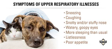 puppy cold symptoms do pets a cold and flu season