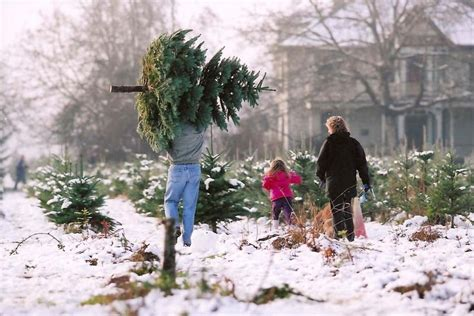 best u cut tree farms seattle area 13 best holidays in washington images on seattle area seattle and seattle washington