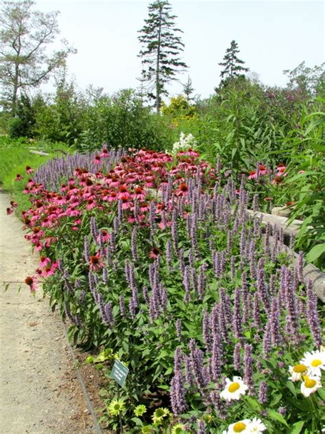 zone 3 gardening 42 plants for your edible landscape in zone 3 or higher