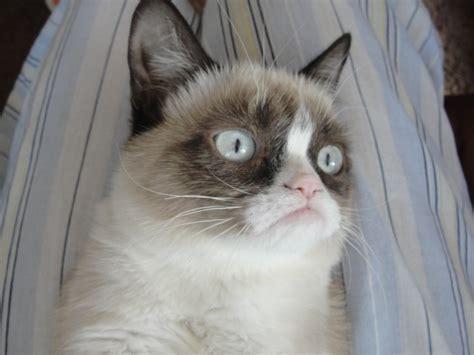 grumpy cat grumpy hd wallpapers