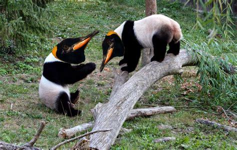 google images animals 5 google animals for 2013 panda penguin are so 2011