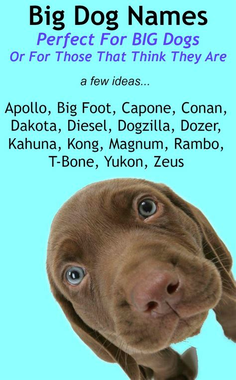 puppy names boy big names for a large breed or
