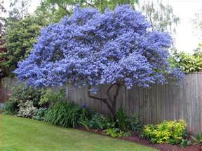 evergreen trees for very small gardens uk garden ideas