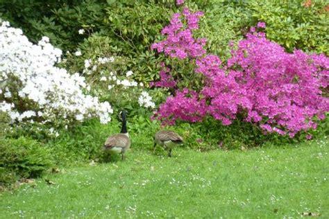 Garten 06 Dortmund by Rhododendron Bl 252 Te Bild Botanischer Garten