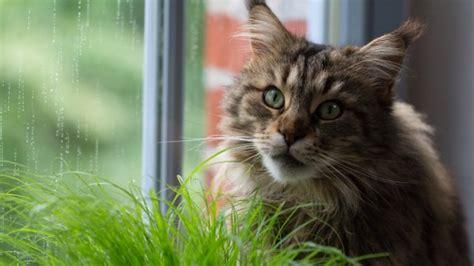 protect  indoor plants  cats gardentipzcom