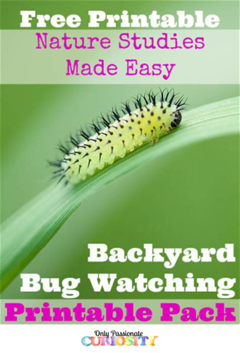 bug free backyard free backyard bug nature study free homeschool deals