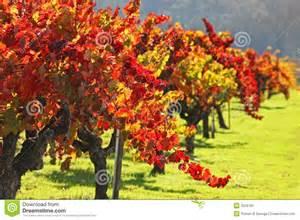 Major Wine Cellar - autumn vineyard napa valley stock image image 3529181