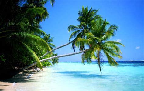 Bonita America 3d servicio de grupaje mar 237 timo al caribe con 11 mercados principales