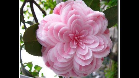immagini di ci di fiori fiori immagini e frasi