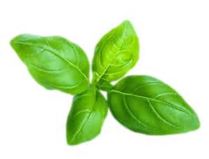 find out all about the herb basil handy herbs