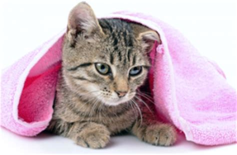 how often should dogs be bathed cat and bath services