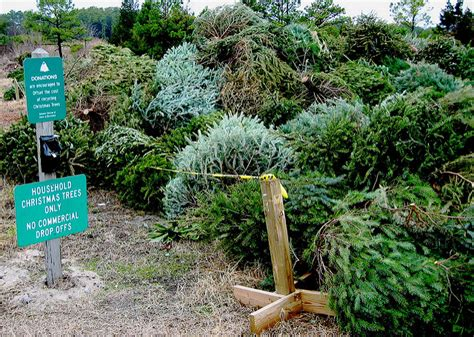christmas tree recycling in birmingham and sutton coldfield