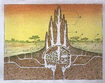 section 1 termite cathedral termite mounds machprinciple com