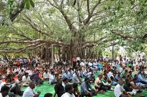 what is the significance of tree what is the significance of the peepal tree in indian