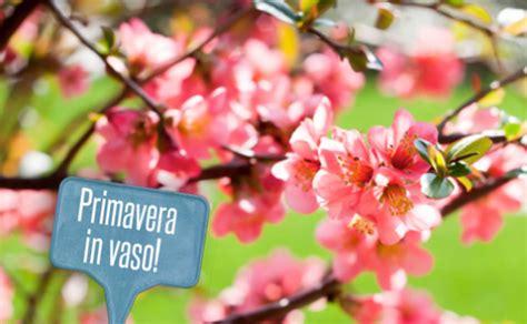 fiori primaverili da vaso fiori primaverili da vaso 28 images oltre 25