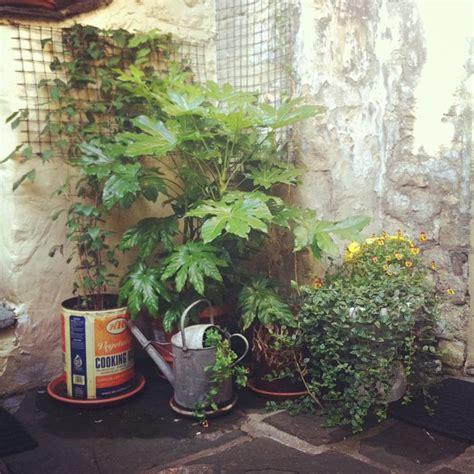 moon to moon small garden pot those plants