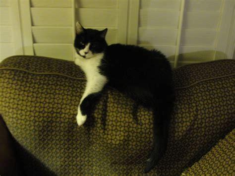 cat on sofa november 171 2012 171 little fat notebook