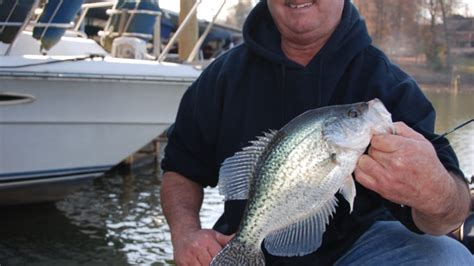 tips  catching crappie    lake wylie docks
