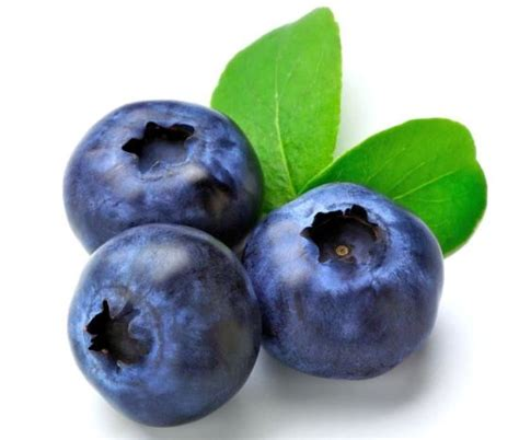 a bug of a different color the benefits health benefits of blueberries organic facts